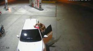 Policial da PM faz boquete em bêbado na rua de Manaus